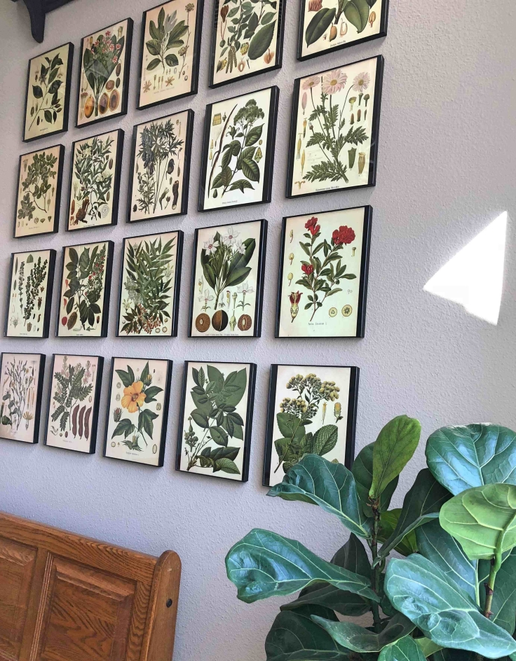 10 Botanical Print Gallery