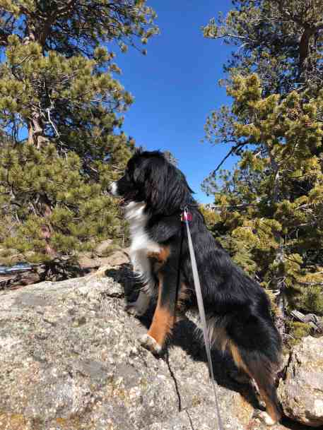 05 Freya Trail
