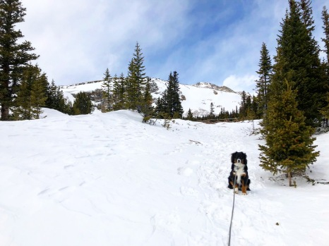 07 Trail - Fence and Freya