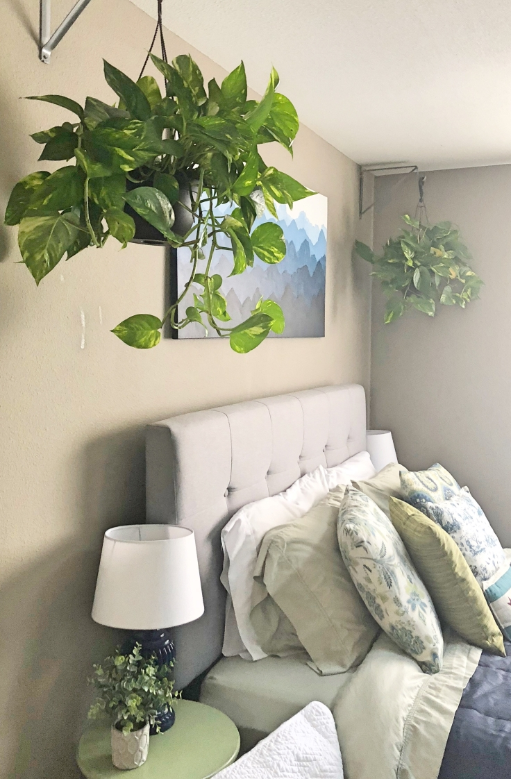 Bedroom Pothos
