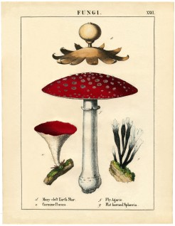 Botanical-Mushroom-Printable-GraphicsFairy