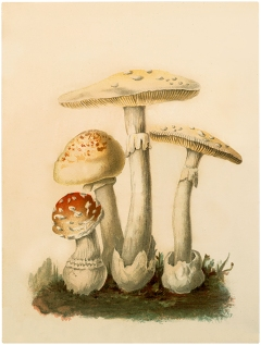 Botanical-Mushrooms-Download-GraphicsFairy