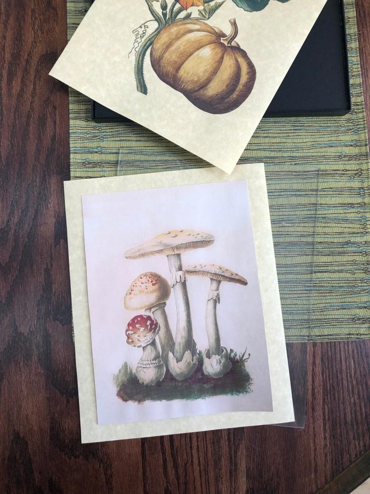 Mushroom Botanical.jpg