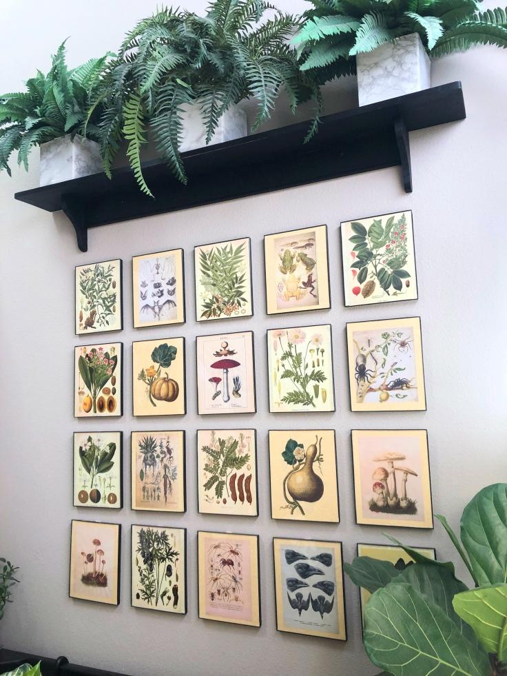 Spooky Botanical Gallery Update 2_Fotor.jpg