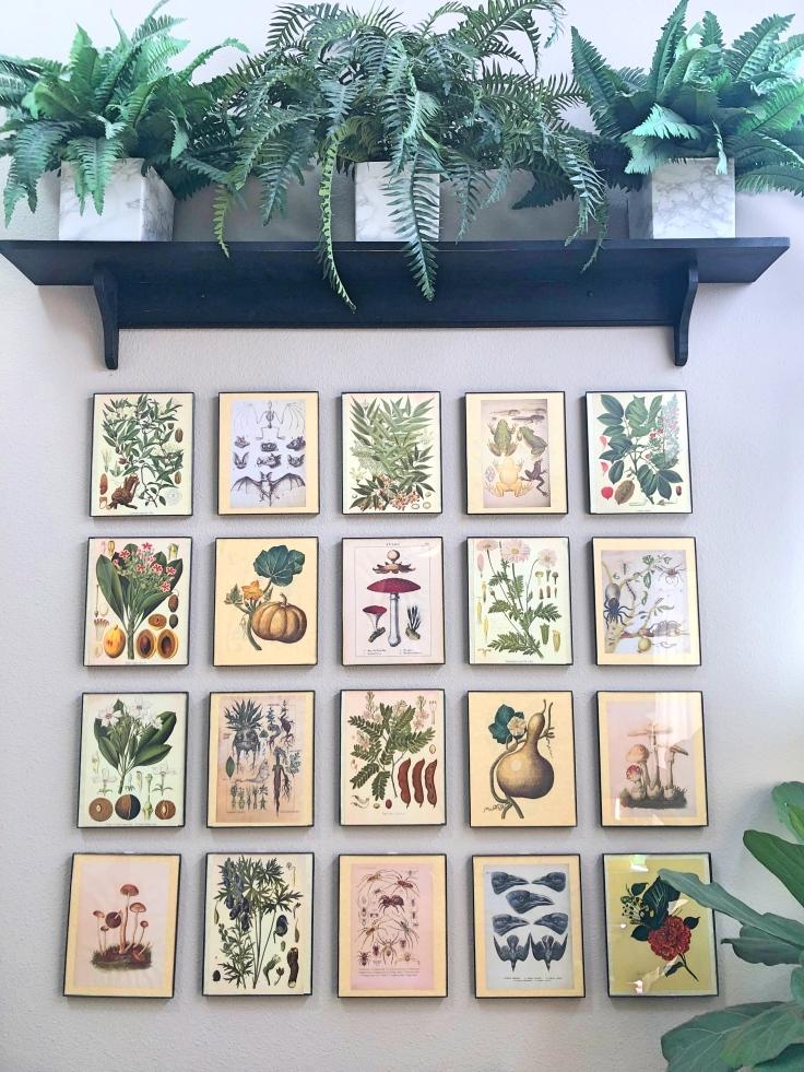 Spooky Botanical Gallery_Fotor.jpg