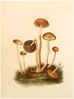 Vintage-Fairy-Mushrooms-Image-GraphicsFairy