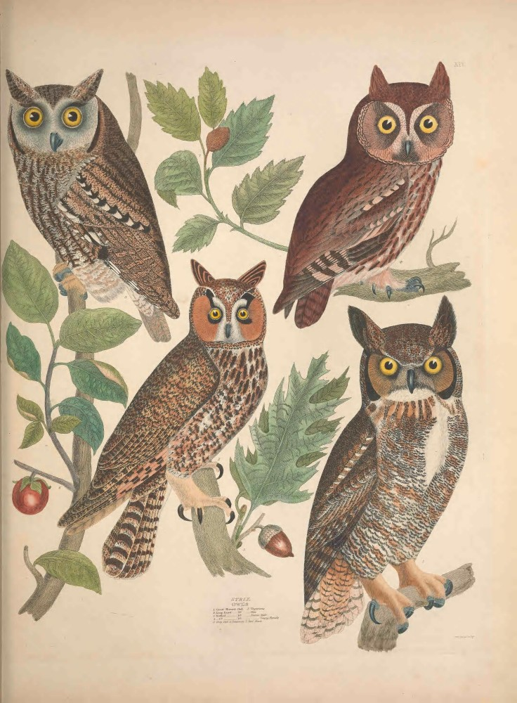 Owl Biodiversity Illustraion