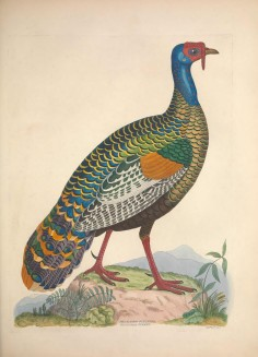 Turkey Biodiversity Illustration 1