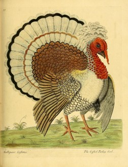 Turkey Biodiversity Illustration 3